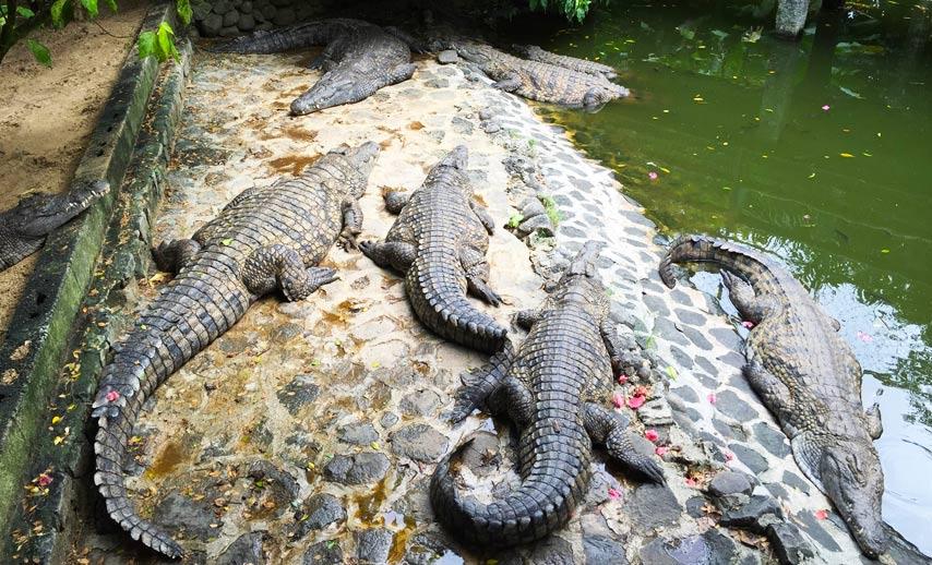 La-Vanille-Crocodile-Park