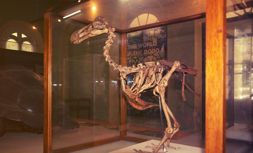 Mauritius Natural History Museum