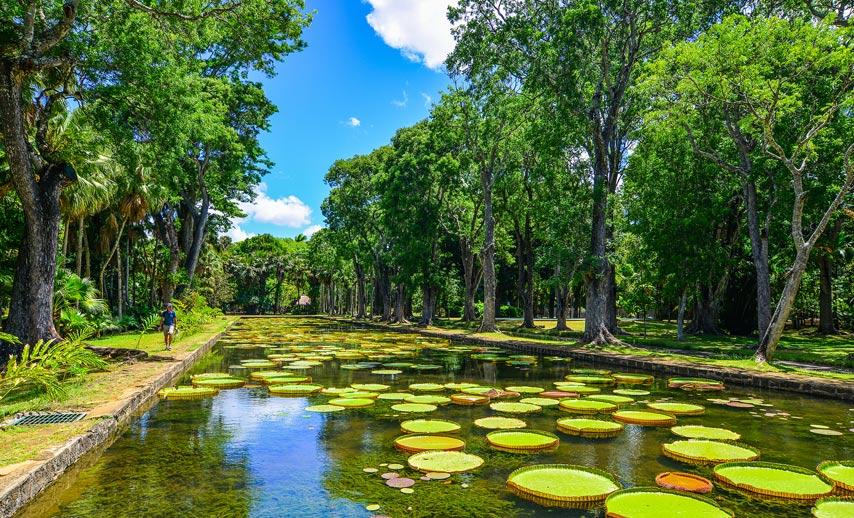 The Botanical Garden at Pamplemousses Mauritius