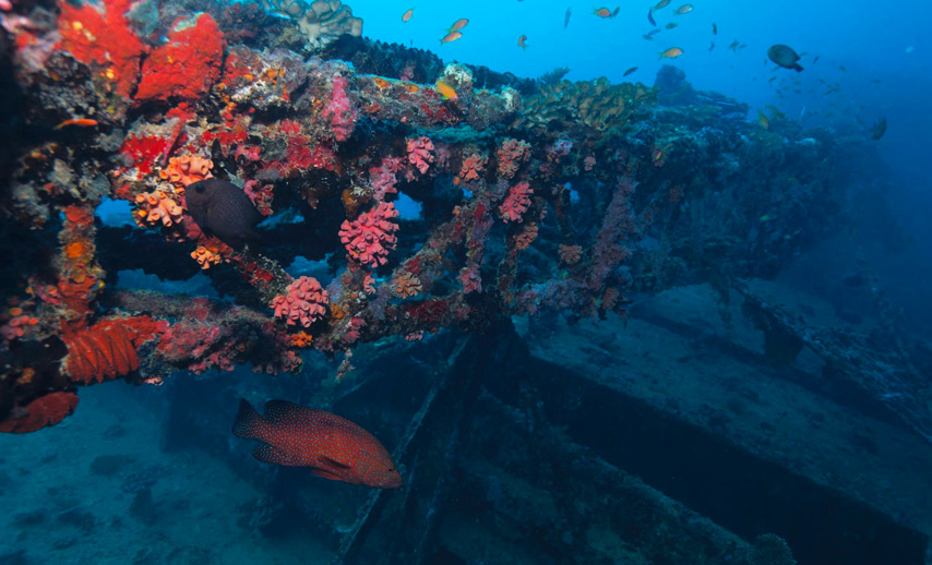 Diving-in--West-and-South-West-of-Mauritius